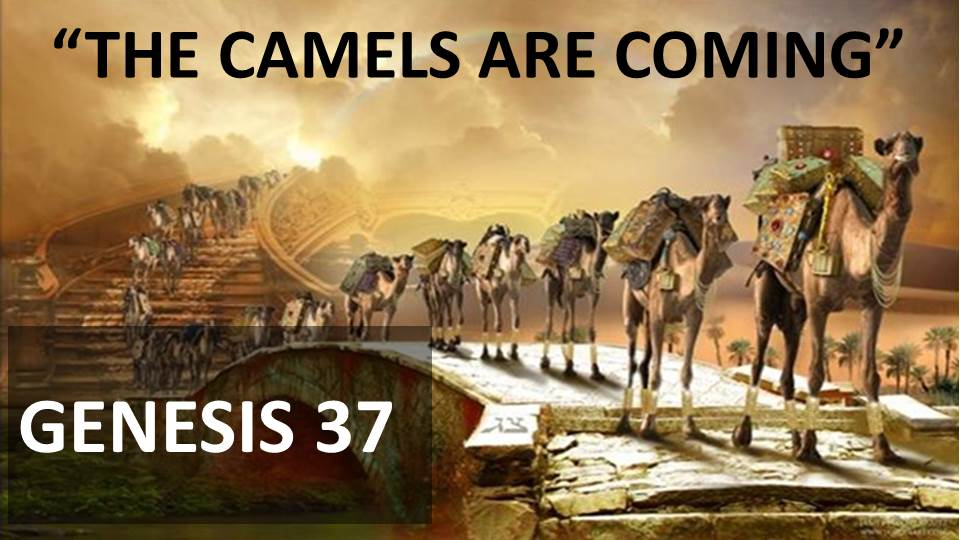 The Camels are Coming Image
